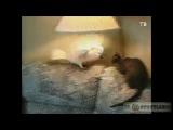 Приколы с кошками - смешное юмор ржака ржач коты котэ угар задорнов новое 2013 100500 comedy club